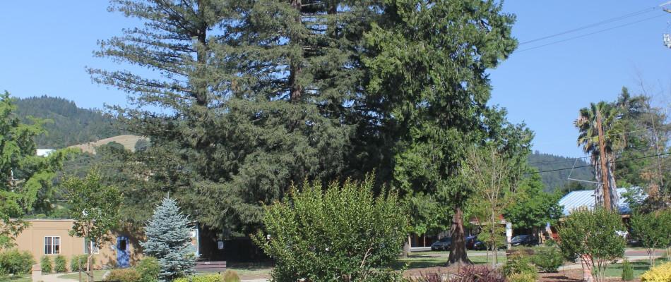 Kleiser Park in Cloverdale